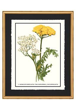 Full Bloom - Clipeolata