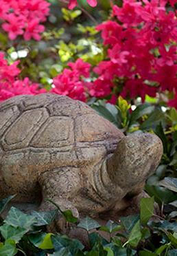 Rampe Douce Tortoise